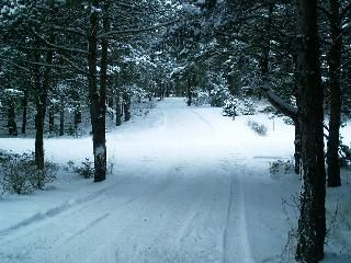 snow mobile trails